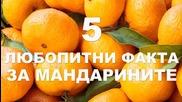 5 любопитни факта за мандарините