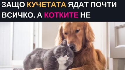 Защо кучетата ядат почто всичко, а котките не