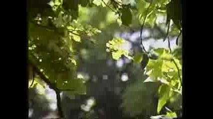 Оркестър Златна Арфа - Добруджанска Ръченица
