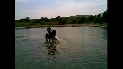 Кон във водата
