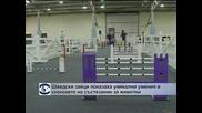 Шведски зайци показаха уникални умения в скоковете