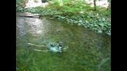 Зебо Плува в реката към Хижа Хубавец :)