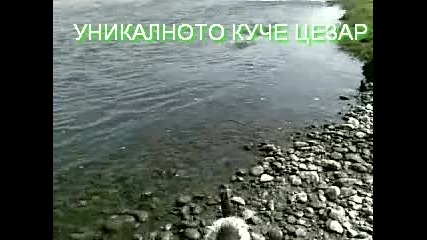 Цезар Станиславов Димитров