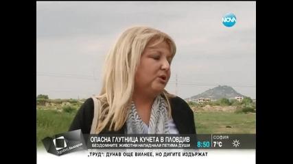 Опасна глутница кучета в Пловдив - Здравей, България (19.05.2014г.)