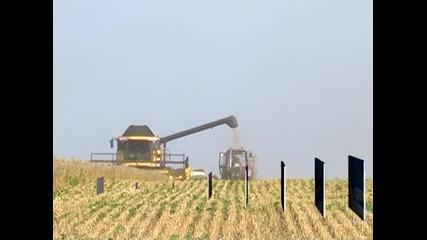 Пшеницата стигна 450 лв. за тон, очаква се поскъпване на хляба