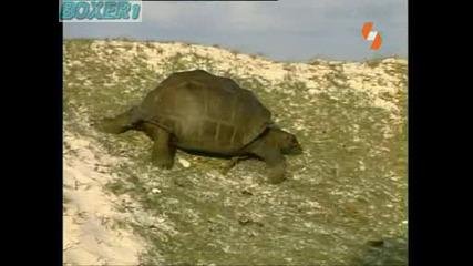 Hq Енциклопедия на животните - костенурка