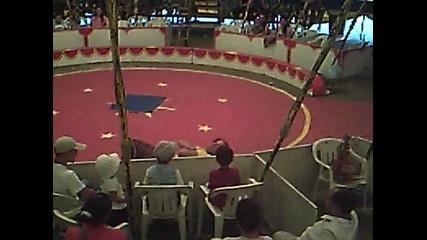 цирк Феникс в Крумовград