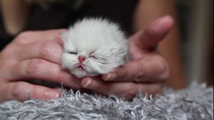 Най - Сладурското Коте Бебе