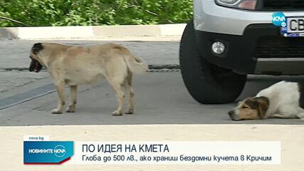По идея на кмета: Глоба до 500лв., ако храниш бездомни кучета в Кричим