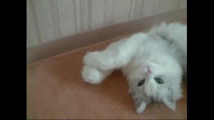Танцуваща котка