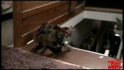 Котка бута друга Котка по стълба
