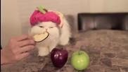 Коте яде ябълка