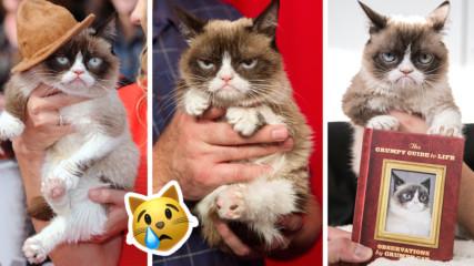 Почина Grumpy cat - най-известната котка в интернет