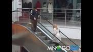 Блондинка срещу ескалатор