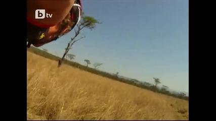 Антилопа скочи върху колоездач по време на състезание