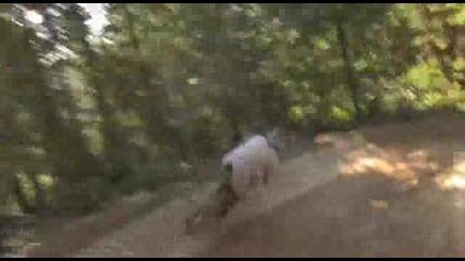 Mountain Bike - Изглед От Каската