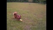 Куче си Играе с Писукаща Играчка