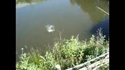 Господин Иванов хваща шаран на водоема на моравско село, Росен го е страх