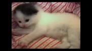 Малко Сладко Коте