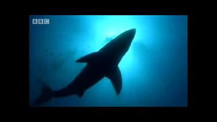На метри от акула...