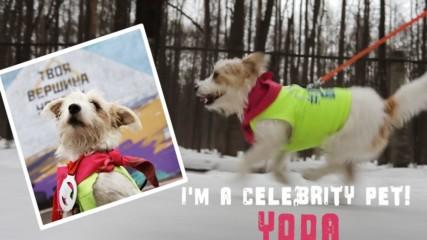 I'm a Celebrity Pet: Yoda got 13,000 followers running marathons