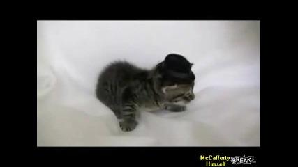 Котка удря шамар на малкото си