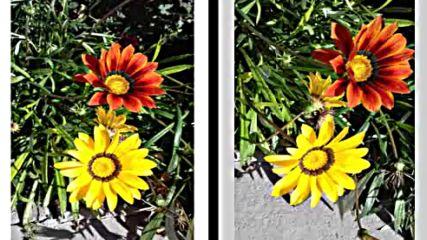 Есенните цветя - радост за душата ми авторски клип
