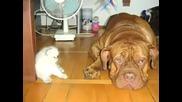 Истински Притятели Животни и Хора Заедно