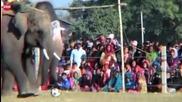 Слонски футболен мач!