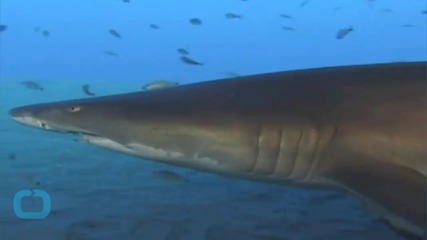 40% of Europe's Sharks and Rays Face Extinction, Says IUCN