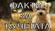 50 Факта за кучетата