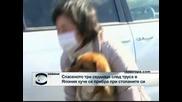 Спасеното от земетресението куче в Япония се прибра при стопаните си