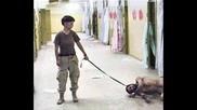 Абу Гариб - Поредната благородна Мисия на НАТО 18+