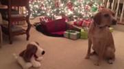 Куче се плаши от пееща играчка .