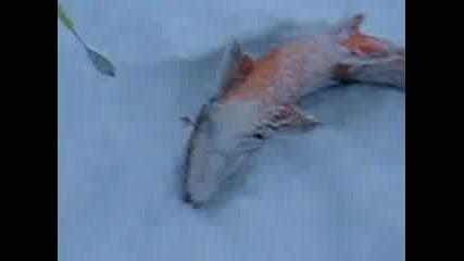 Риболов на лед