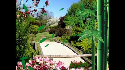 Blossom Spring in A Japanese Garden - Meditation from Thais - G. Zamphir [hq]