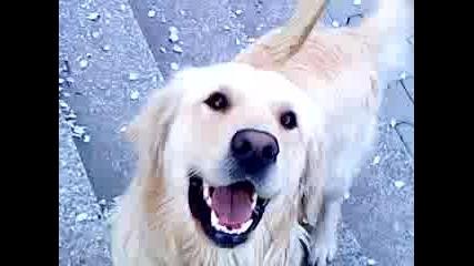 Сладко куче 3