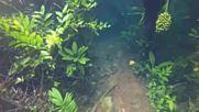 В Бразилия могат да се разхождат под вода