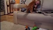 Котка Vs Бебе