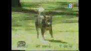 Куче ближи момичета там където нетрябва