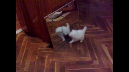 Missy vs mirror