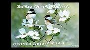 Звуци от природата - Сутрешна птича песен