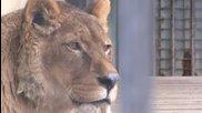 Живота в Зоопарк Обихиро, Япония