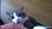 Забавни котета - Компилация