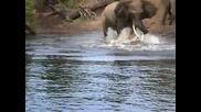 Крокодил захапва Слон за хобота!