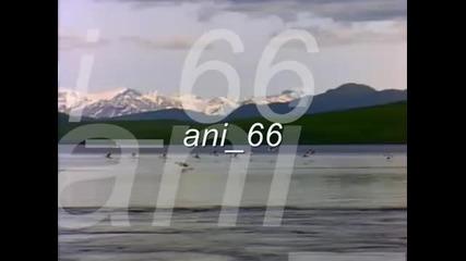 ani 66 - 1