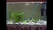 ribki babeka
