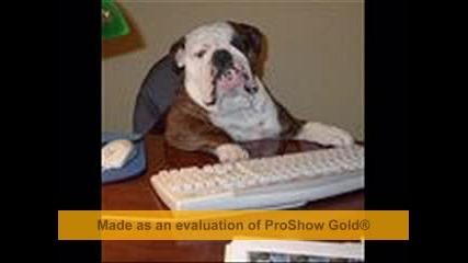 Funny Dog :d