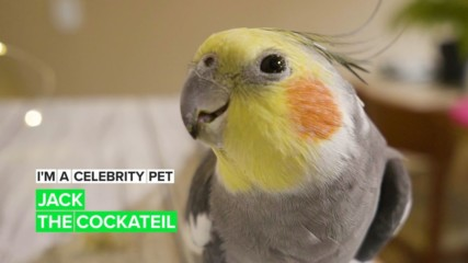 I'm a Celebrity Pet! Jack is a bird model who loves to pose