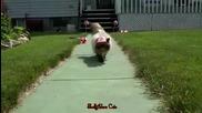 Канадско коте